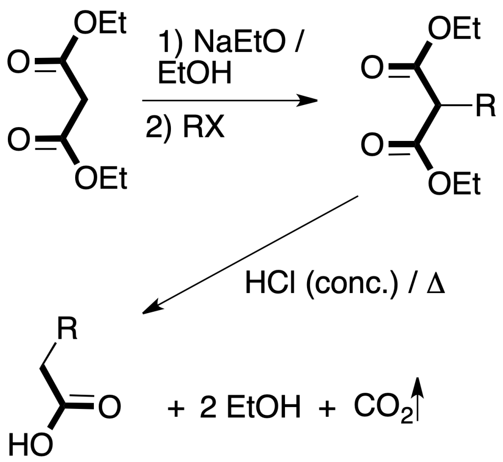 sintesis organica sistesis malonica